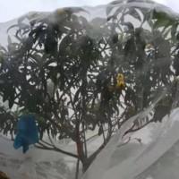 脐橙防虫网结实抗氧化脐橙防虫网 耐用果树防虫网脐橙防虫网