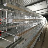 养鸡设备@蛋鸡笼养设备@优质阶梯式蛋鸡笼价格