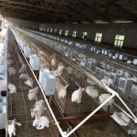 蛋鸡养殖设备介绍
