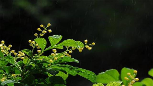 米兰花秋天怎么养,米兰花的养殖方法和注意事项